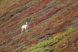 DCC Comments on Draft Alaska Wildlife Action Plan